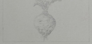Study for Revival Field: Netherlands Brassica napus